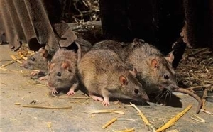 How My 4-month-old Baby Girl Was Brutally Killed at Home by Rats - Man Shares Horror Story